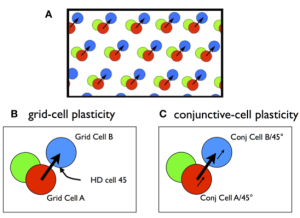 grid and conj plasticity