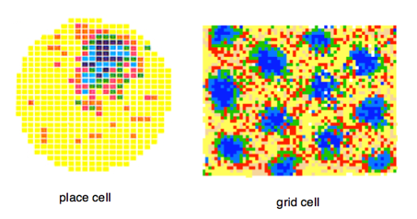 Place Cell and Representations