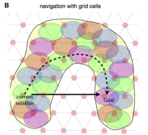 navigation with grid cells