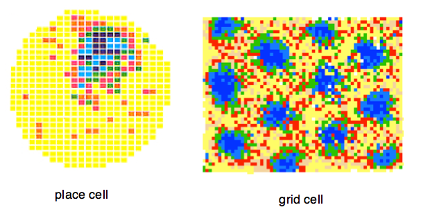 The Significance of the Modular Organization of Entorhinal Grid Cells (2/6)