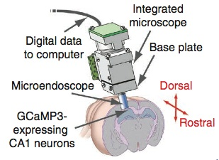 Optical Recording of Maps in the Hippocampus  (1/6)
