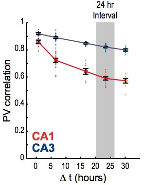 From Mankin et al S5. Population vector spatial correlations with the original session decrease with time in CA1, less in CA3.